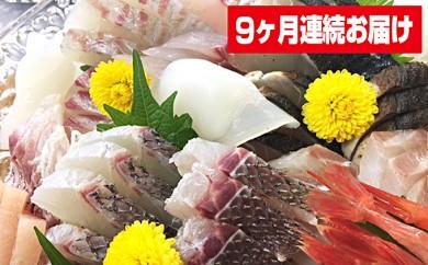 [№5684-1055]本州配送限定 産地直送 朝どれ氷見産鮮魚お刺身セット定期便9ヶ月連続