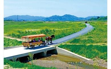 京馬車で行く周遊コース