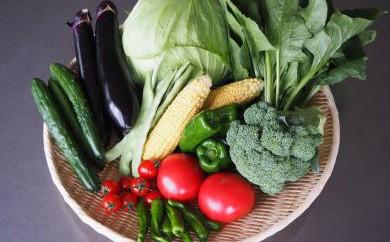 HMG099 【農家直送】七時雨山麓の季節の豪華野菜セット