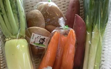 [№5684-1153]氷見野菜セット