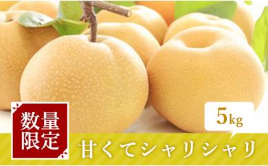[№5672-0138]榎本さんが作った「朝もぎ梨 豊水」 5kg ※クレジット限定