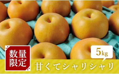 [№5672-0124]中村さんが作った朝もぎ梨5kg  ※クレジット限定