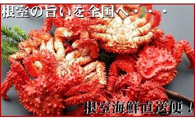 CB-70007 【北海道根室産】茹でたて花咲ガニ7~10尾(計2.8kg)[358655]