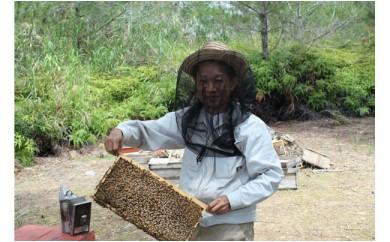 希少な天然ハチミツ 東の蜜 やんばる産440g【数量限定】