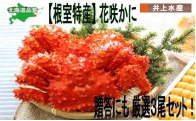CC-07012 【北海道根室産】花咲ガニ3尾セット[351714]