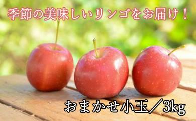 HMG131 八幡平市産 松尾りんご/食べきり小玉詰め合わせ