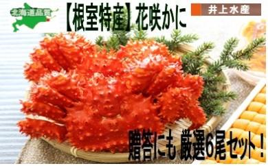CD-07010 【北海道根室産】花咲ガニ6尾セット[351717]