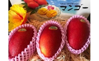 B392 それはそれは美味しいマンゴー!L3玉
