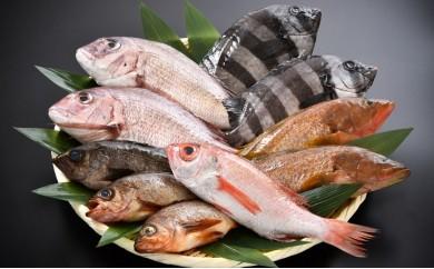 [C010] 日本海・鮮魚詰め合わせ