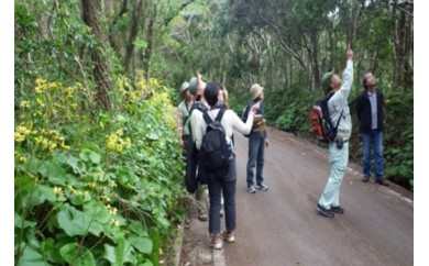 やんばるの大自然で癒しの森林散策ツアー(3時間コース)
