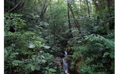 やんばるの森林 リフレッシュと癒しの森林散策ツアー(3時間コース)