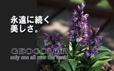 HMG151 【永遠に続く美しさ】 高山植物アートフラワー/ハクサンチドリ