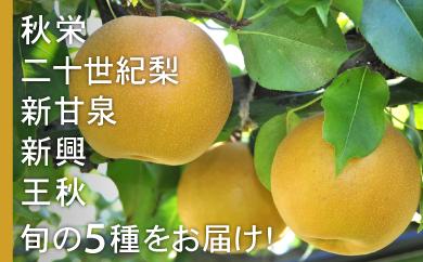 95.「琴浦のおもて梨」リレーセット