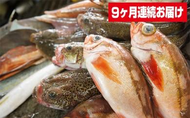 [№5684-1157]本州配送限定 産地直送 氷見産鮮魚詰め合せ定期便9ヶ月連続