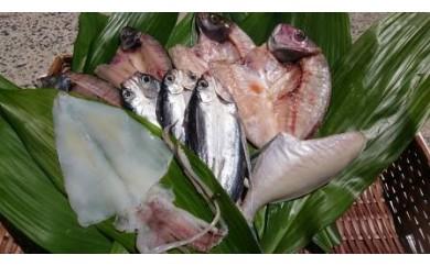 50C.日本海で水揚げされた魚介類の一夜干しセット