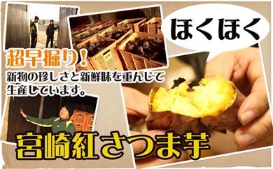 A142 【超早堀り!!】宮崎紅さつま芋