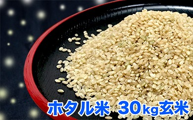 N-2 ホタルの飛び交う地で育ったコシヒカリ 「ホタル米」 玄米30kg【30年度産新米】