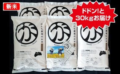 [№5865-0138]がんも農場のお米ドドン!と30kgセット