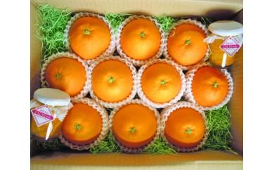 No.048 温室ネーブルオレンジ大箱セット