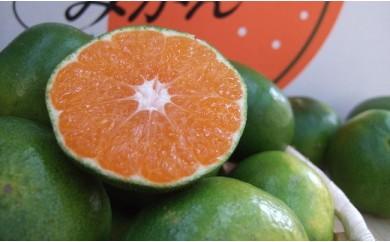 G102 【有機栽培のあま~いみかんに一年中囲まれる幸せ♪】大町町柑橘倶楽部(年6回定期便)