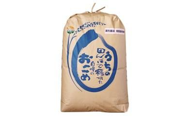 C2101 特別栽培米 漢方栽培精米20kg