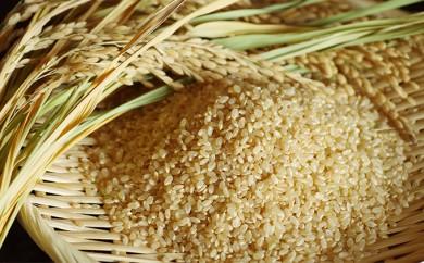 [№5528-0015]【平成29年産】手取りのすず風米こしひかり 玄米10kg