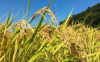 [№5755-0057]特別栽培米「コシヒカリ」・「キヌヒカリ」食べくらべセット