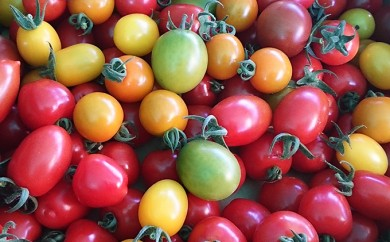 [№5724-0136]<2018年7月中旬よりお届け>大作農園のカラフルミニトマト約2kg