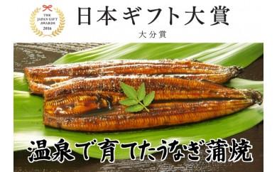 B163 日本ギフト大賞受賞!純国産温泉うなぎ蒲焼2尾