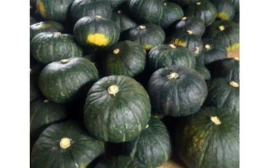 No.059 かねこ農園 有機基準栽培 かぼちゃ 約10kg