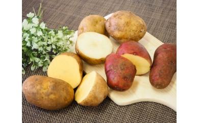 No.057 千歳市の大自然が産んだじゃがいも / 男爵 インカのめざめ レッドムーン 馬鈴薯 北海道 人気