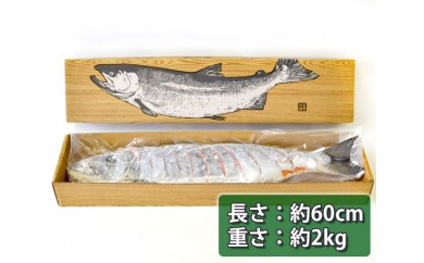No.069 新巻鮭(約2kg)