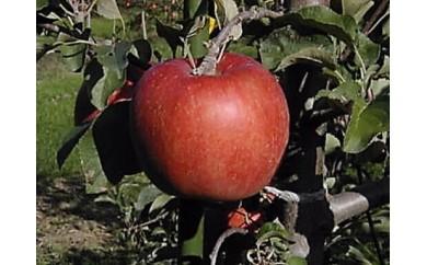 [№5865-0142]佐久のりんご あいかの香り 約3kg 等級 特選品 ※クレジット限定※