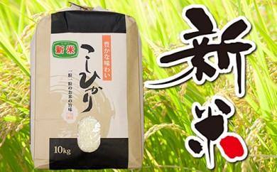 平成29年 千葉県産「コシヒカリ」30kg(精米)