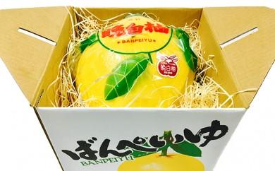 [№5682-0172]八代産晩白柚1玉(くまモンの箱入り)