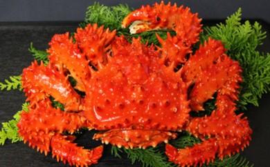 [№5863-0098]超特大!ボイル冷凍花咲がに1.6kg