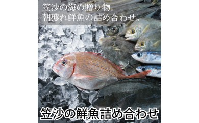 07-52 ◆南さつま笠沙の鮮魚詰合せ(4kg)