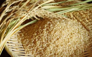 [№5755-0065]特別栽培米「らんざん恵米コシヒカリ」玄米30kg 1袋