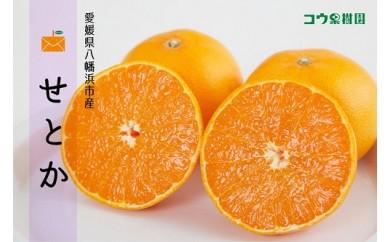 C33-1.コウ果樹園の「柑橘の王様 せとか3kg」