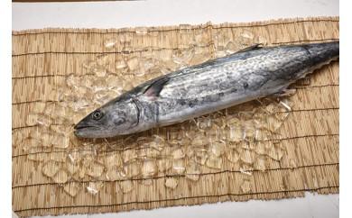 「愛海の恵み」大分豊後水道産 天然サワラ(約2~3kg 1本)