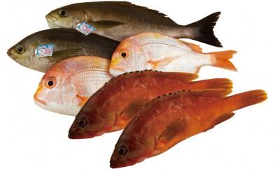 J347 宇久島屋鮮魚盛り合わせ【魚の宝庫 五島列島から直送】【400pt】