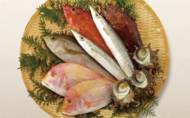 J341 宇久島地魚詰め合わせ【魚の宝庫 五島列島から直送】【400pt】