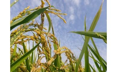 【H29年産新米】高度クリーン米「きたくりん」5kg