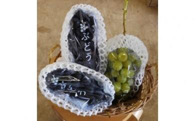 茨城県産 巨峰・シャインマスカットセット(約2kg)