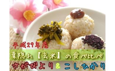 C60-O 【29年収穫米】葉隠れ『特選玄米20㎏』食べ比べセット【さがびより10㎏・コシヒカリ10㎏】≪産地限定≫