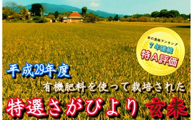 C79-O 《H29年産米》有機肥料を使って栽培した『特選さがびより』玄米20kg(10kg×2)(みやき町産)