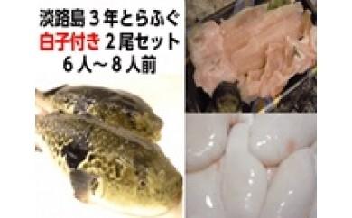B081:【季節限定】淡路島3年とらふぐ白子付き2尾セット(6~8人前)