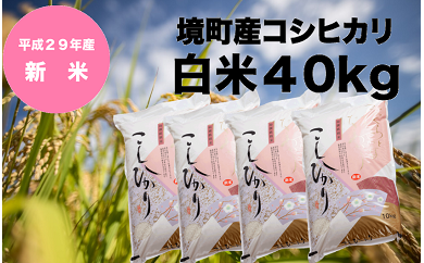 708 【29年産】境町産コシヒカリ白米40kg