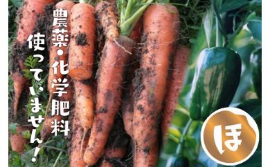 【C】市長が認めた無農薬野菜!ほんまもん野菜セットB