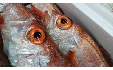 B205 期間限定!鮮魚「のどぐろ」